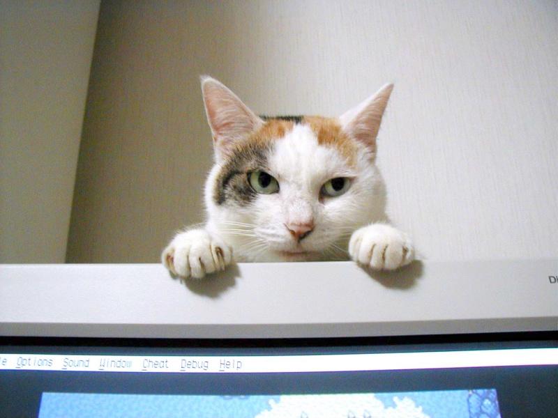 パンチラ part49 [無断転載禁止]©bbspink.comYouTube動画>1本 ->画像>3406枚
